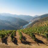 Il vino italiano piace, anche nell'immobiliare